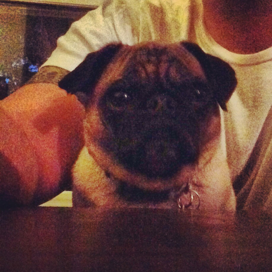 pug_picture